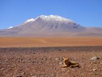 Bolivia-Atacama-20110210084022